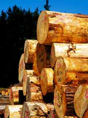 Spruce European Logs Timber